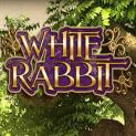 white rabbit slot
